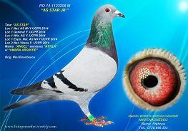 licitatii_1415743663Nini-Enachescu-RO-1123208-2014-M-foto-mica