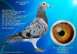 licitatii_1415743813Nini-Enachescu-RO-1123076-2014-M-foto-mica