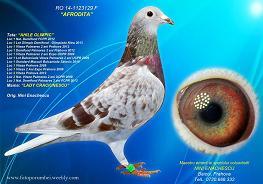 licitatii_1415744709Nini-Enachescu-RO-1123129-2014-F-foto-mica